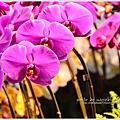 orchid22.jpg