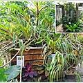 orchid31.jpg