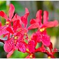 orchid06.jpg
