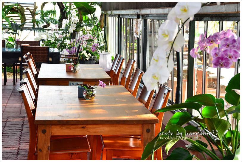 orchid05.jpg