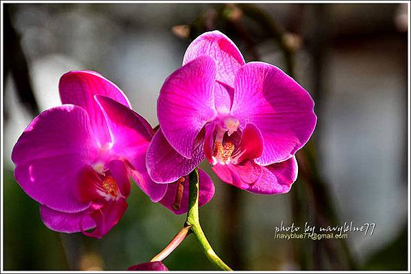 orchid08.jpg