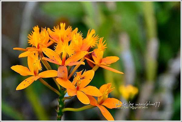 orchid07.jpg