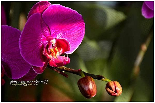 orchid09.jpg