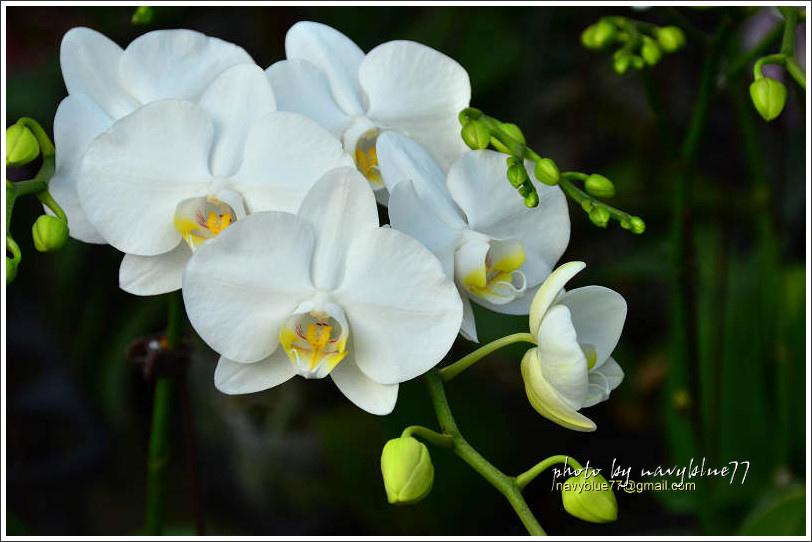 orchid19.jpg