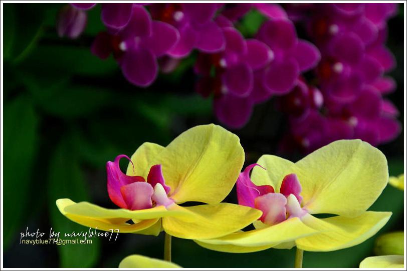 orchid20.jpg