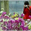 orchid23.jpg
