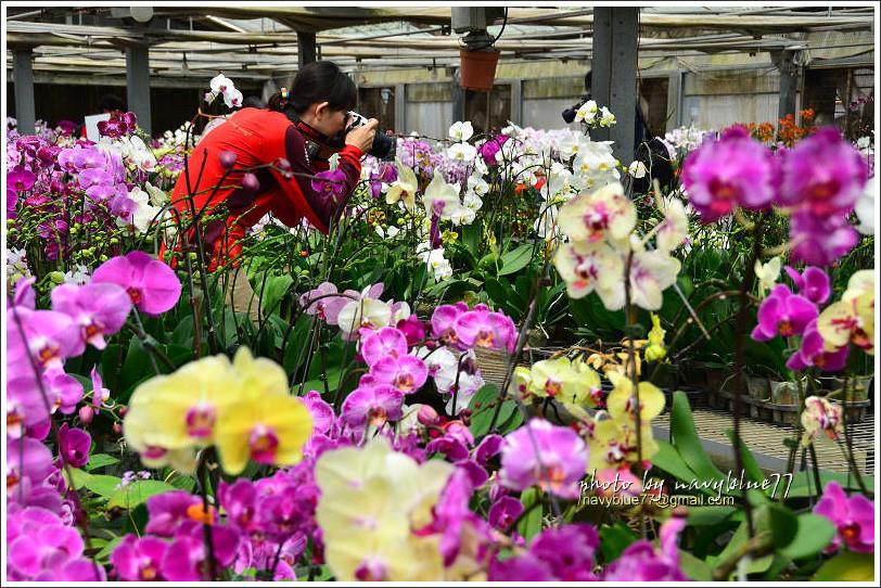 orchid24.jpg