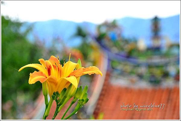 daylily31.jpg