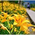 daylily12.jpg