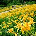 daylily13.jpg