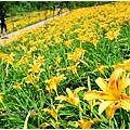 daylily17.jpg