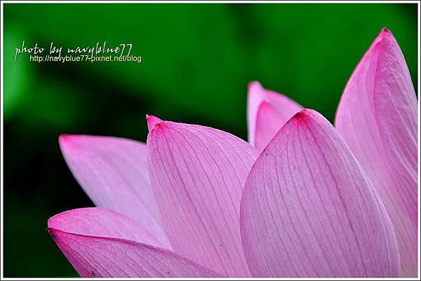 waterlily2014-49.jpg
