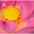 waterlily2014-07.jpg