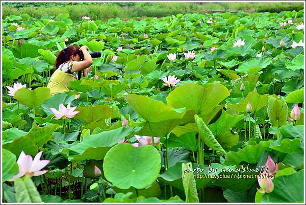 waterlily2014-16.jpg