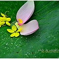 waterlily2014-17.jpg