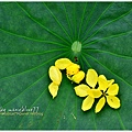 waterlily2014-18.jpg