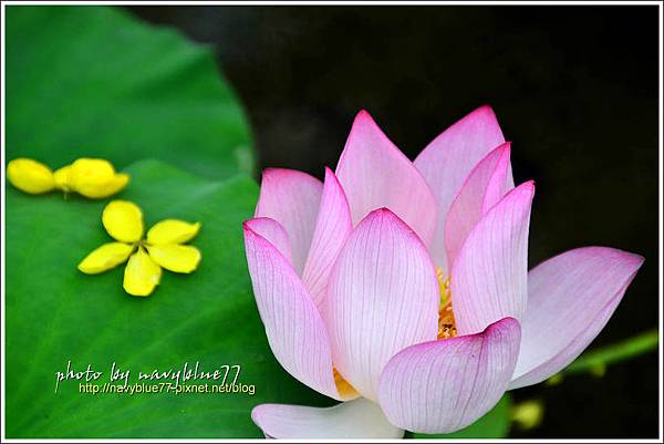 waterlily2014-27.jpg