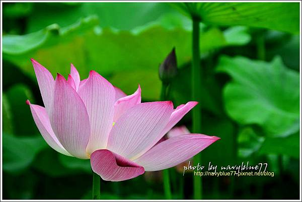 waterlily2014-33.jpg