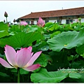 waterlily2014-34.jpg