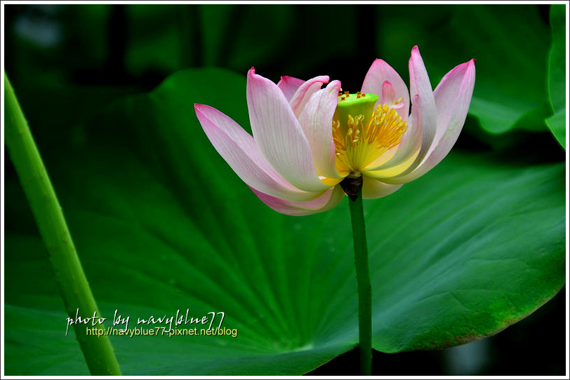 waterlily2014-36.jpg