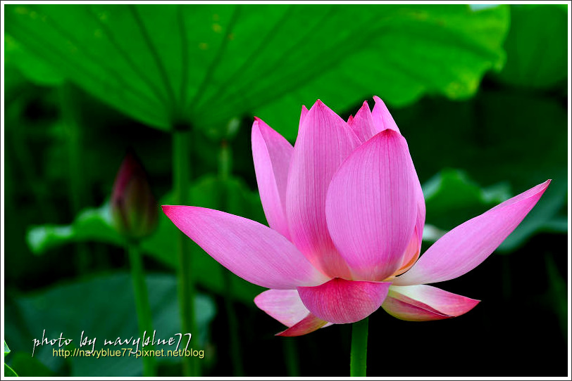waterlily2014-45.jpg