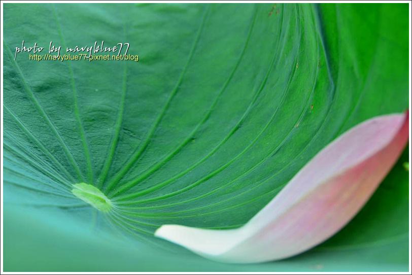 waterlily2014-44.jpg