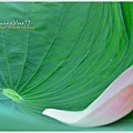 waterlily2014-44.jpg