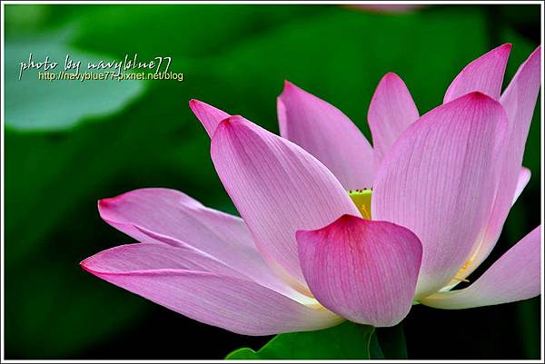waterlily2014-47.jpg