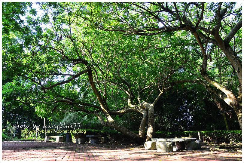 竹崎公園12.jpg