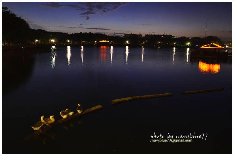 天鵝湖08.jpg
