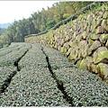 樟湖-大尖山21.jpg