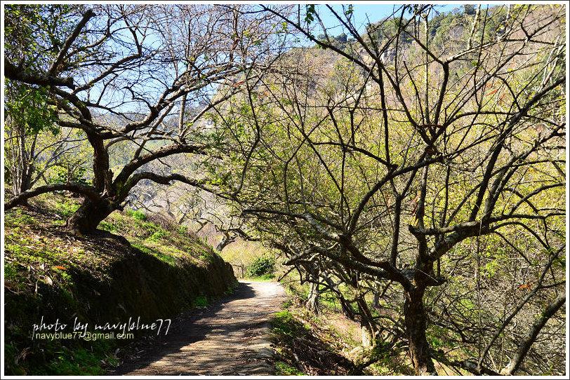 牛稠坑柳家梅園後山祕境16.jpg
