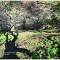 牛稠坑柳家梅園後山祕境25.jpg