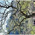牛稠坑柳家梅園後山祕境28.jpg