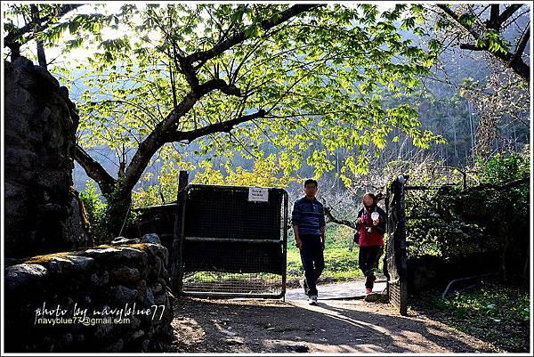 牛稠坑柳家梅園後山祕境41.jpg