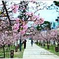 新竹麗池公園賞櫻04.jpg