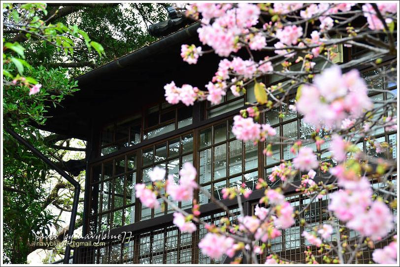 新竹麗池公園賞櫻22.jpg