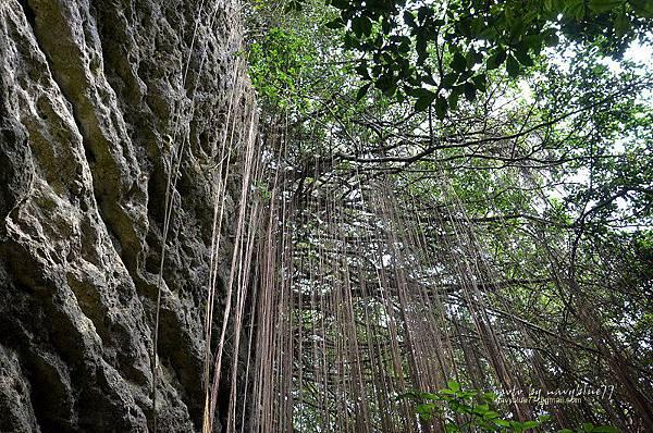北柴山步道11.JPG
