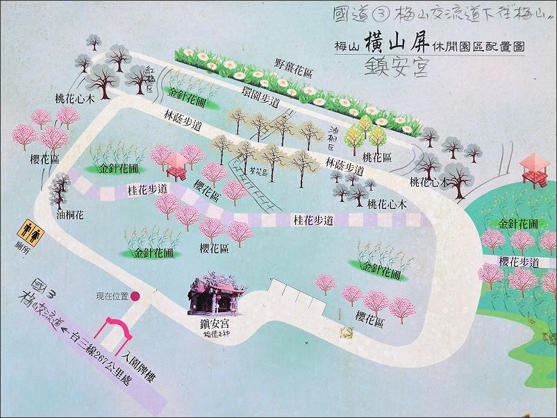 嘉義梅山橫山屏金針花34.JPG
