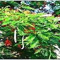 高雄湖內番茄會社30.JPG