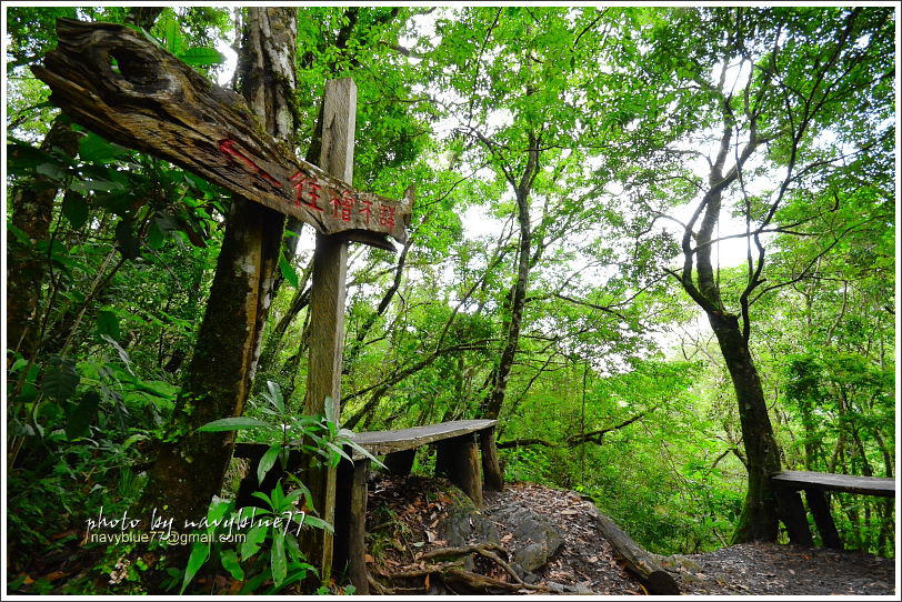 尖石鎮西堡巨木群步道15.JPG