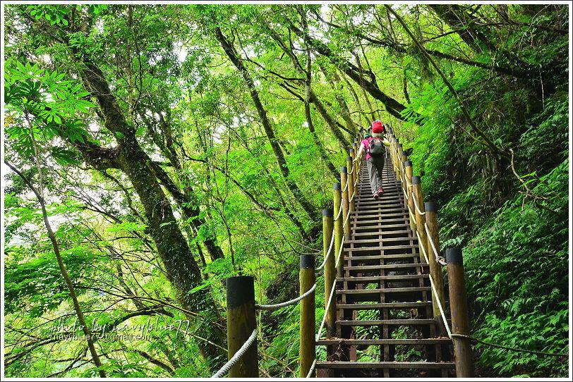 尖石鎮西堡巨木群步道20.JPG