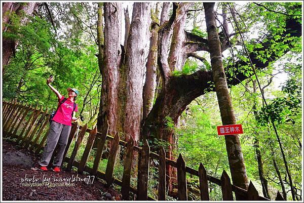 尖石鎮西堡巨木群步道59.JPG