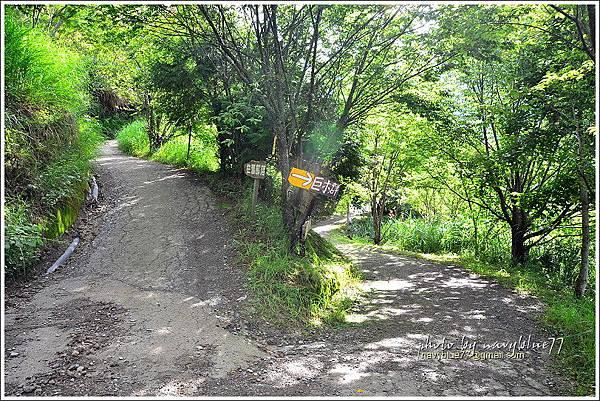 司馬庫斯巨木群步道03.JPG