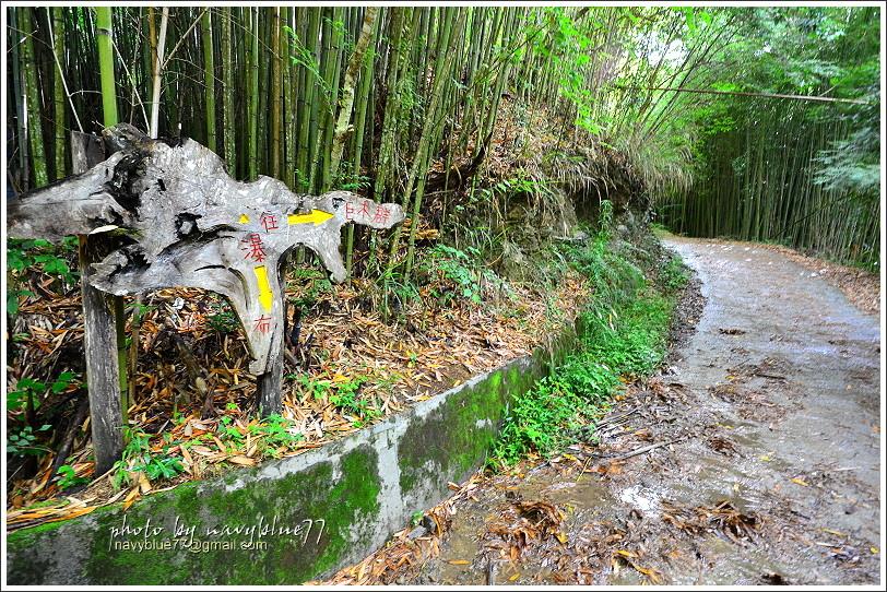 司馬庫斯巨木群步道04.JPG