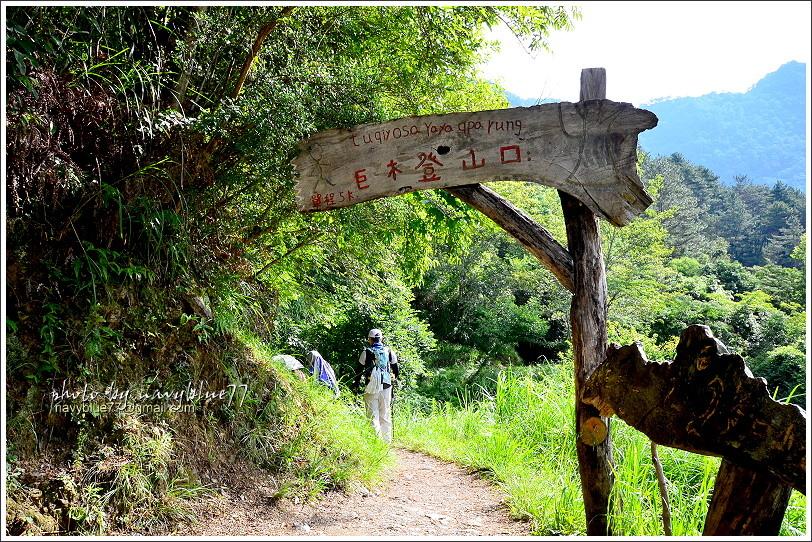 司馬庫斯巨木群步道05.JPG