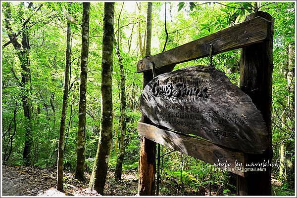 司馬庫斯巨木群步道12.JPG