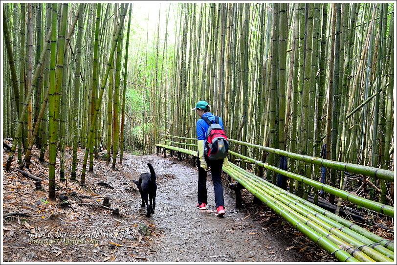 司馬庫斯巨木群步道15.JPG