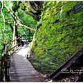 司馬庫斯巨木群步道23.JPG