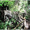 司馬庫斯巨木群步道26.JPG